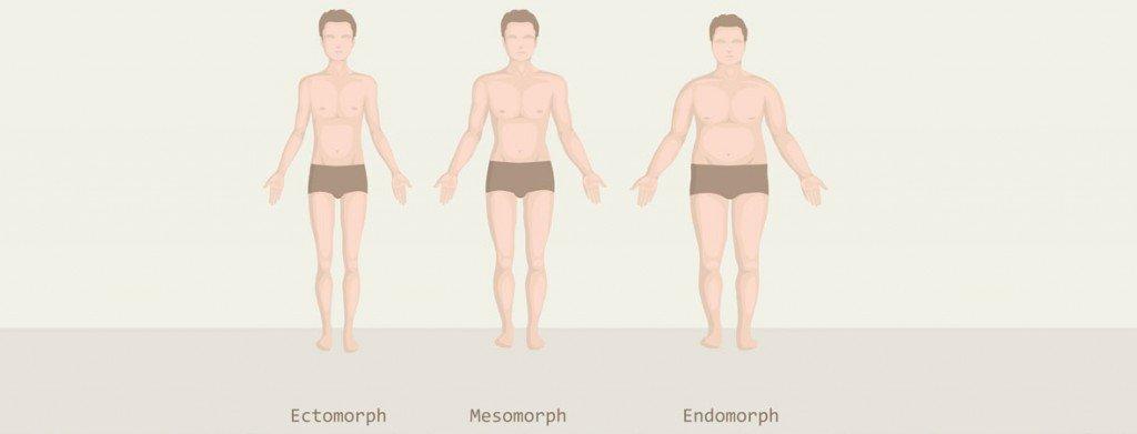 lichaamstypen
