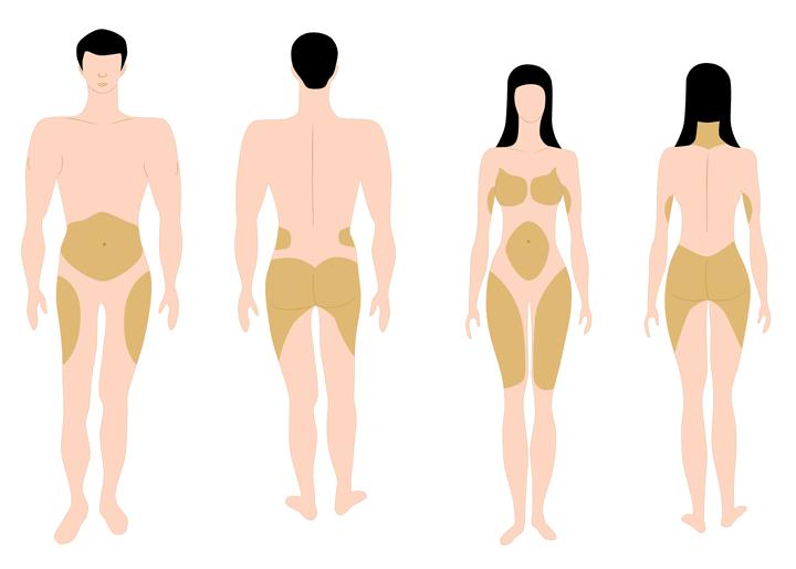 vetverdeling-lichaam