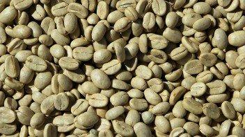 groene-koffie-bonen