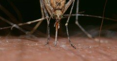 Waarom word ik altijd gebeten door een mug?