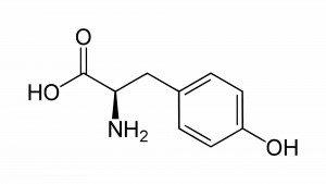 Wat is er bekend over de werking van L-tyrosine?