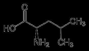 Leucine: de belangrijkste informatie