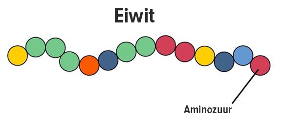 eiwitten aminozuur