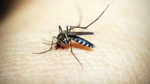 Waarom word ik altijd gestoken door een mug?