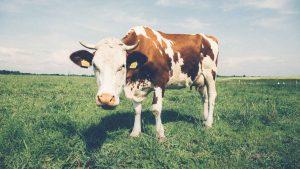 De 10 voedingshypes van 2016, een terugblik