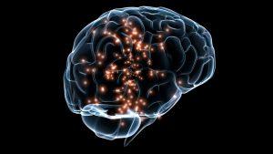 De invloed van het gewicht op de hersenen