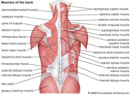 Rugspieren