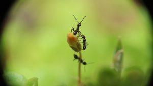Column: stop met mierenneuken