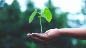 The Planetary Health Diet: gezond én duurzaam eten